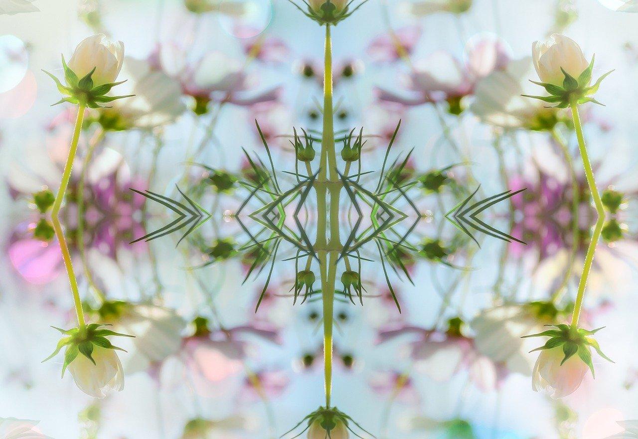 植物 イメージ