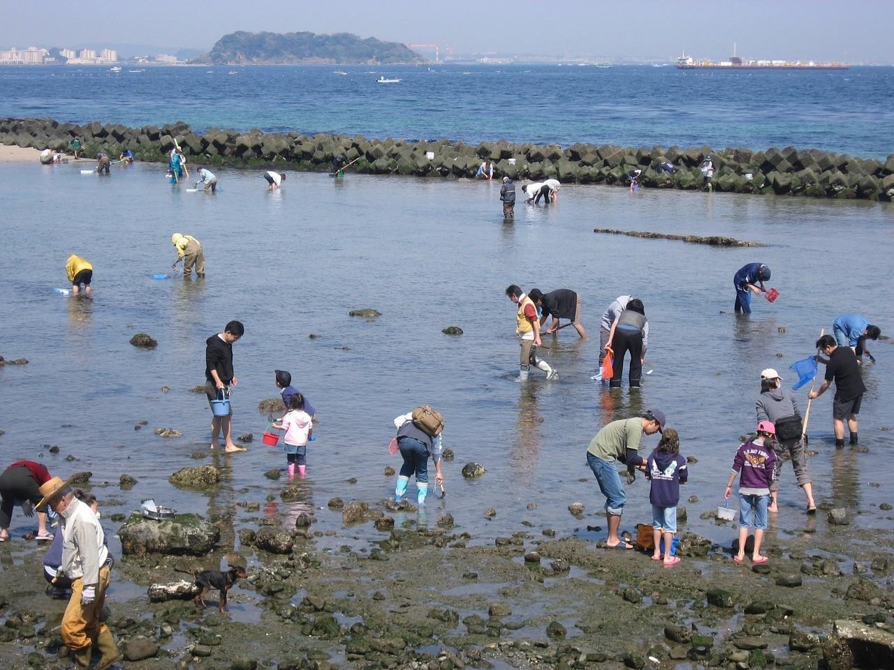 潮干狩り 海岸 風景