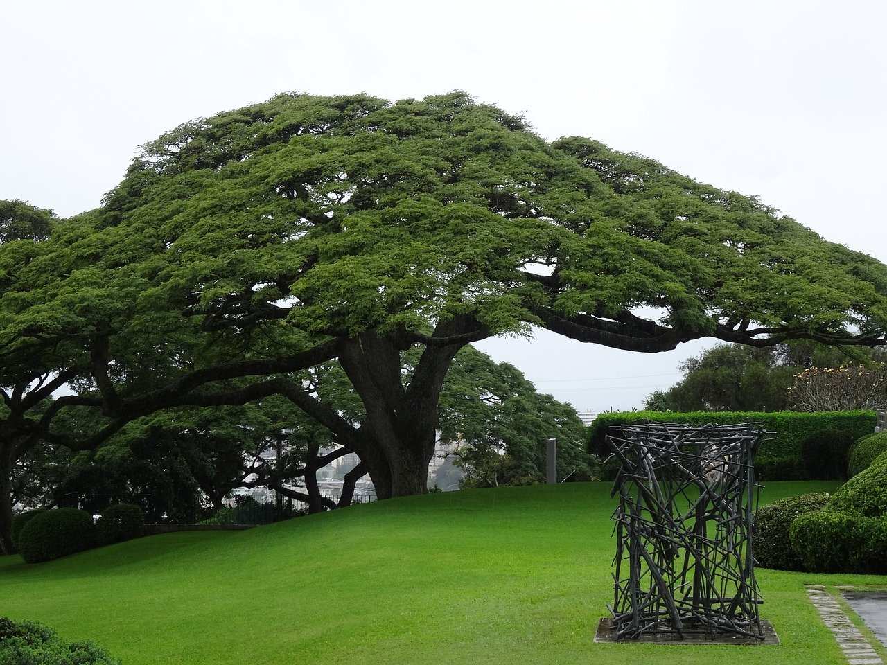 ハワイ 自然 風景